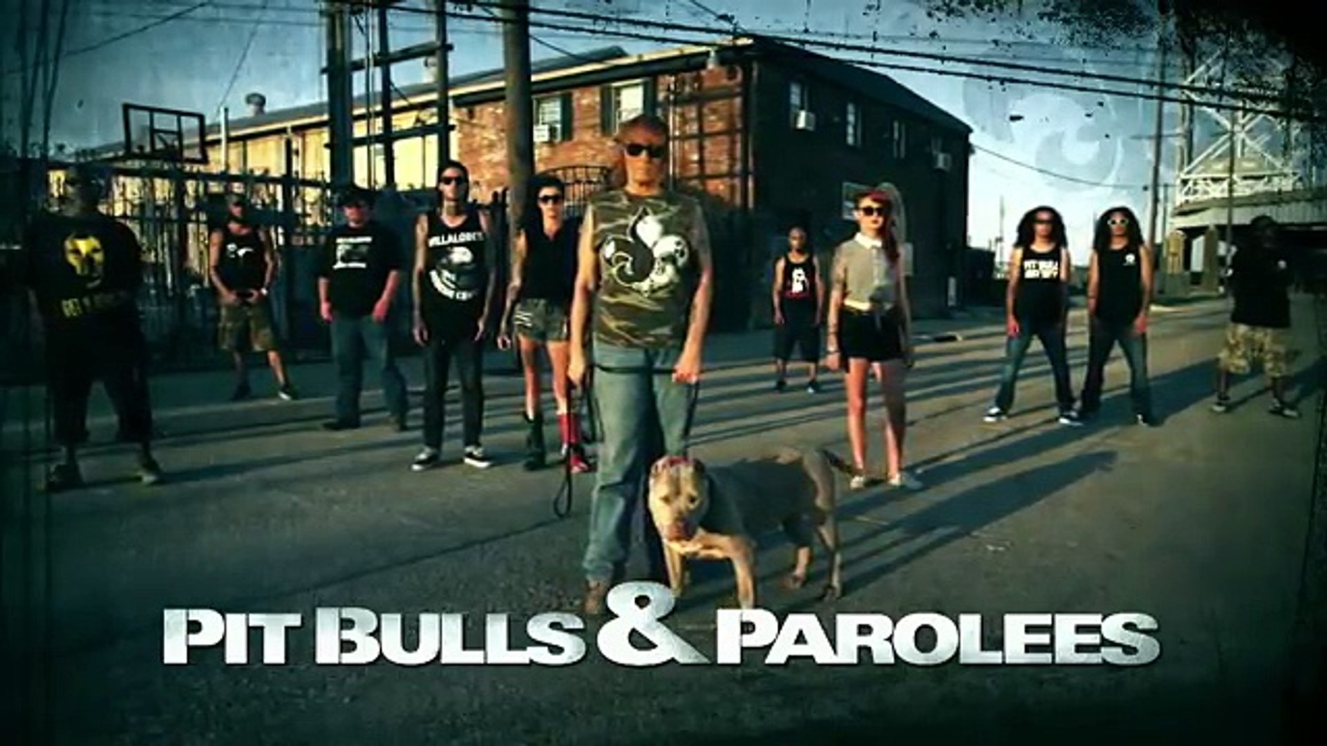 One Last Road Trip for Bluey   Pit Bulls and Parolees