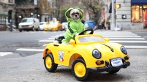 Pampered Pooch Drives Porsche Around New York: CUTE AS FLUFF