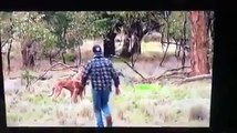 Cet homme se bat avec un kangourou pour défendre un chien !