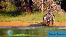 Real !!!, Animals Attack   Crocodile Vs Human   Crocodile Attack lion, Elephant, tiger, anaconda