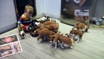 16 chiots Basenji se ruent sur un petit garçon. Ce qu'ils lui font va vous faire fondre