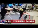 Sahibi istedi Pitbull yoldan geçen adama saldırdı