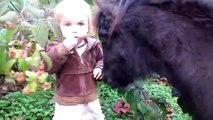 Mini Horses and Shetland Pony Videos for Kids - Miniature Horses and Real Ponies Playing