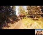 When Animals Attacks Humans 2016 - Wild Animals Attacks Compilation