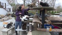 Man Who Lives With 300 Rescued Cats Turns Home Into Loving Sanctuary