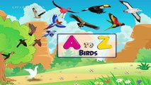 birds-birds names-birds names in english-learn words-how to learn