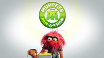 Video Animal  The Muppets On Facebook   The Muppets Fan-A-Thon   The Muppets