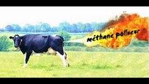 Le méthane que lâchent les bovins - Témoignage d'un éleveur