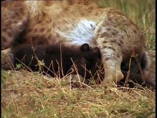La hyène - Champions de la nature