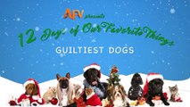 AFV's 12 Days of Christmas Guiltiest Dogs
