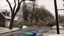 Il filme les dégâts d'une tempête d'hiver et va assister à une chute d'arbre impressionnante