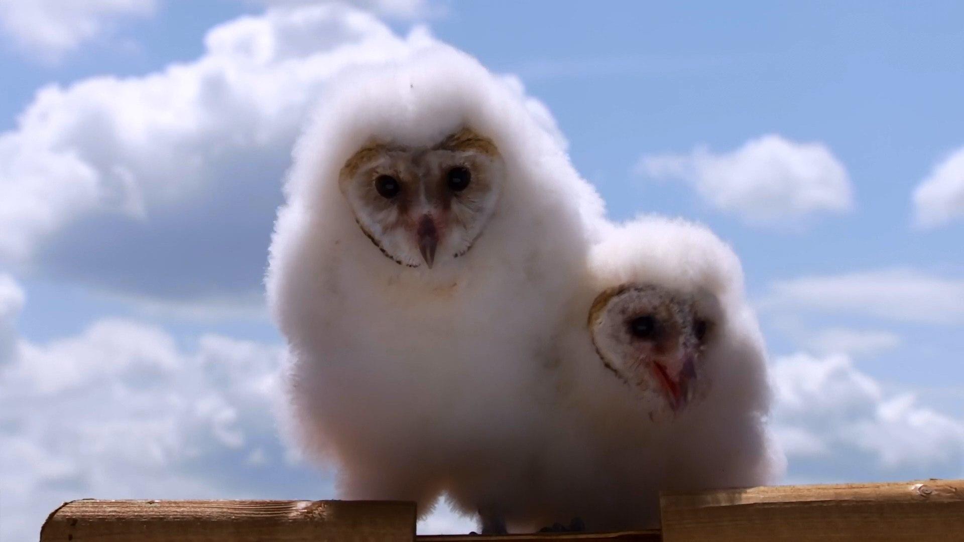 BBC Мир Природы.Совы По ту сторону тайны / The Natural World. Super Powered Owls (2015) HD1080p