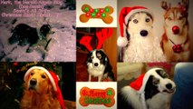 """Hark, the Herald Angels Sing"" Santa's All Stars (Dogs Remix - Christmas Music Miracle Mix Xmas / Noël Version 2009) HD - HQ"