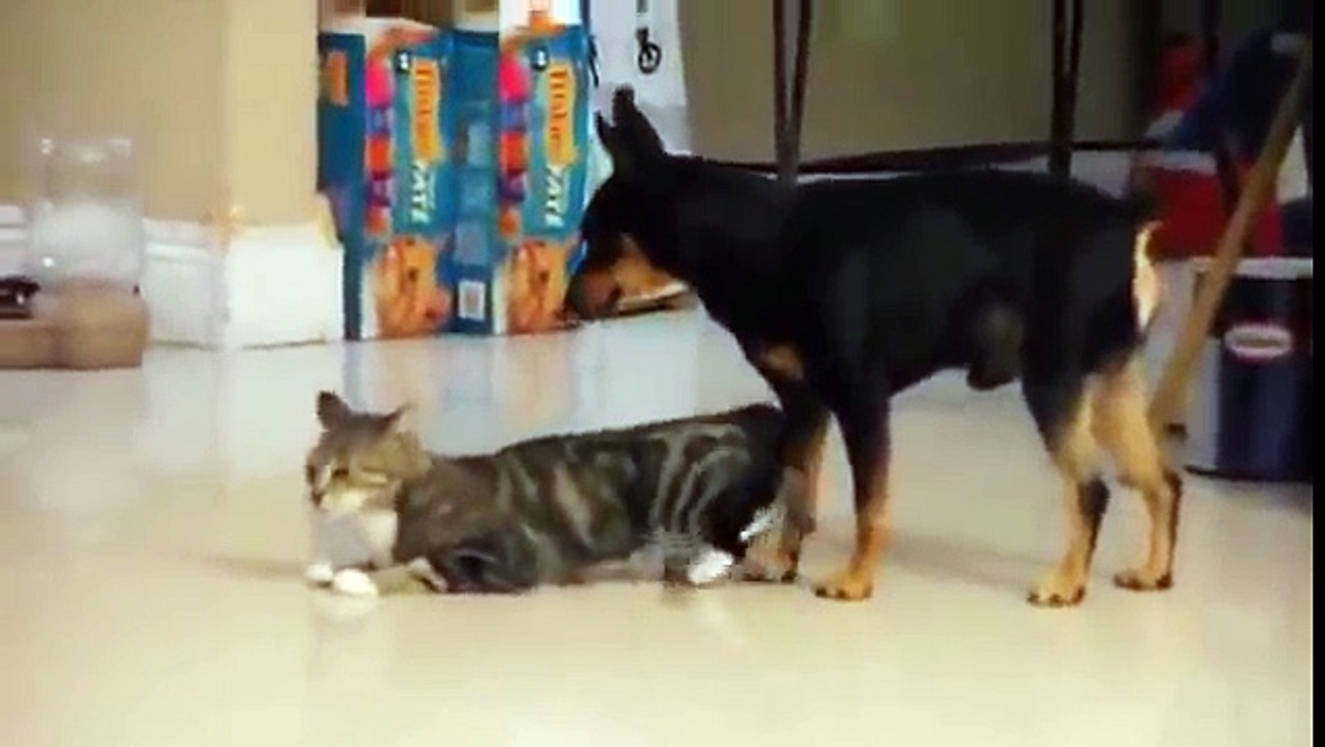 Dog Mate With Cats Video Dailymotion