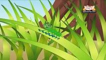 Nursery Rhyme - Caterpillar,Caterpillar