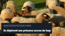 Des moutons à Paris pour protester contre le loup