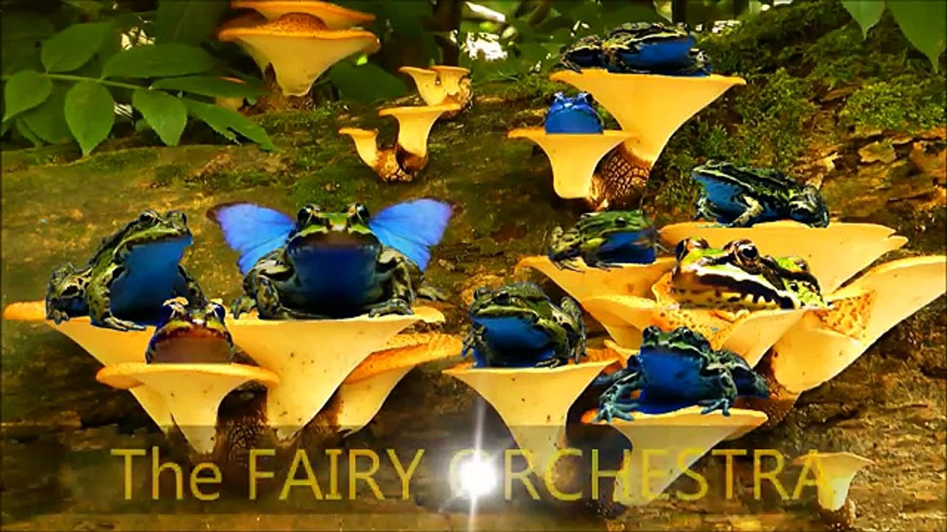 FAIRY ORCHESTRA - Real Fairies Caught on Tape 2014