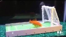 Animals Playing Soccer - When animals love football too
