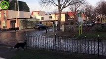 Ce chien lance la balle aux inconnus pour jouer avec eux devant son jardin
