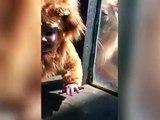 Vidéo Dailymotion : La rencontre insolite entre un bébé d'un an déguisé en lion rencontre un véritable lion dans un zoo. L'animal semble intrigué par le déguisement du petit garçon. !