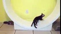 Sympa la roue pour chats