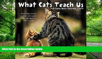 Audiobook What Cats Teach Us 2017 Box Calendar Willow Creek Press Audiobook Download