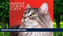 Pre Order Just Maine Coon Cats 2017 Wall Calendar (Cat Breed Calendars) Willow Creek Press