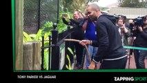 Zap Sport 16 décembre : Tony Parker s'amuse avec un jaguar au zoo de San Antonio (déo)