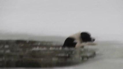 Rischia La Vita Per Salvare Un Cane In Pericolo: Il Filmato Vi terrà con Il Fiato Sospeso