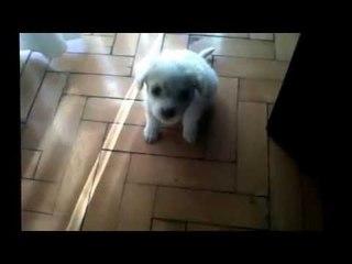 Mi perrita Cata de cachorra 1 mes y medio