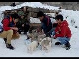 Harçlıklarını Sokak Köpekleri İçin Harcayan Koca Yürekli Çocuklar