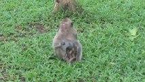 Amazing Monkey Meeting Tourist at Hun Sokhon Park, Tourist Meeting with the monkey (1)