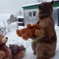 Un ours se fait de nouveaux copains