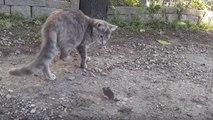 Un chat se fait voler sa souris