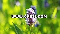 광주안마 / 연신내건전마사지  / OPSS1。COM / 구글 → 오피쓰