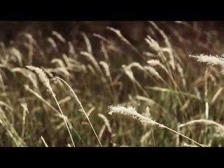 Rintihan Kalbu -  Qalam Band ft Rafidah Ibrahim (Official Music Video)