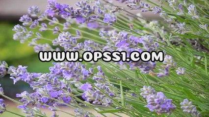 구리안마 / 전주건전마사지  / OPSS1。COM / 구글 → 오피쓰