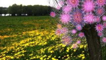 The Magic of Springtime - Die Magie des Frühlings    Royalty Free Stock Footage