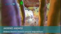 Akdeniz Anemi Nedir (Şifa Market 0224 234 56 78) | www.losemibelirtileri.net