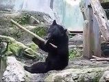 Kung Fu Bear, noul adversar al lui Kung Fu Panda