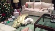 Il cane scarta il pacco regalo sotto l'albero di Natale e trova… il padrone!