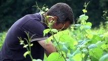 Réduction des pesticides: interview de Stéphane Perraud