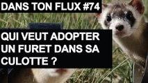 Qui veut adopter un furet dans sa culotte - #DansTonFlux 74