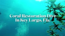 Sport Diver In The Field: Scuba Diving With The Coral Restoration Foundation in Key Largo, Florida