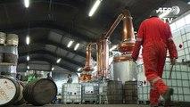 Ecosse: les producteurs de whisky profitent des effets du Brexit