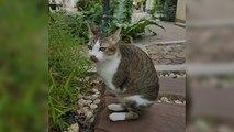 Un chat amputé continue de vivre avec deux pattes