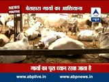 News Positive: Vishnu Charitable Trust - an NGO for cows