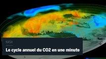 Une vidéo montre le cycle du dioxyde de carbone en une minute