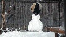 Quand un Panda rencontre un Bonhomme de neige