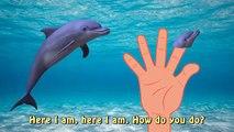 Finger Family Sea Animal Finger Family Nursery Rhyme Whale Orca Killer Whale dolphin octopus Daddy